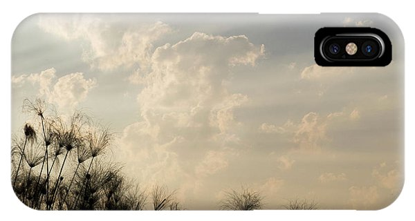 Sunrays Above Papyrus Plants, Okavango IPhone Case
