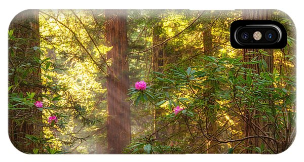 Sunrays Over Redwoods IPhone Case