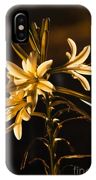 Sunrise Ajo Lily IPhone Case
