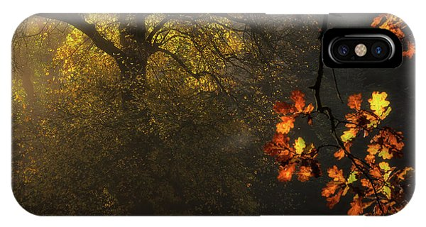 Foliage iPhone Case - Sun's Decoration by Marek Boguszak