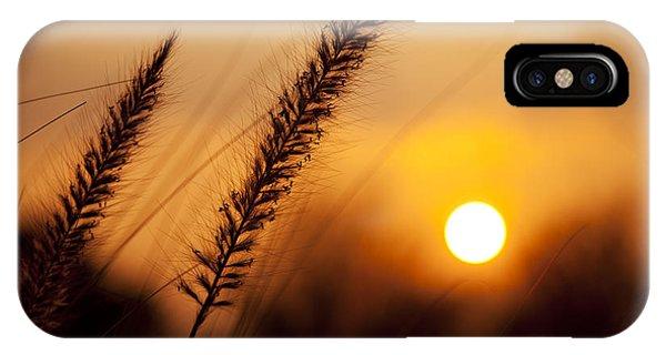 Sunset Fountain Grass IPhone Case