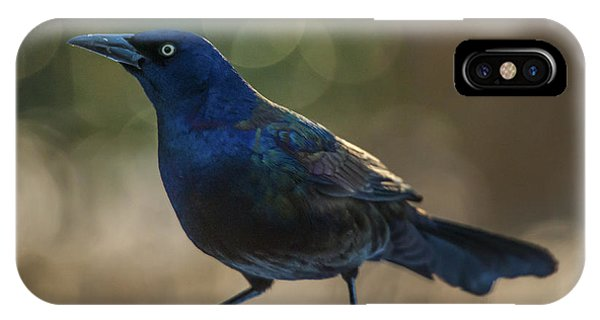 Sunset Grackle IPhone Case
