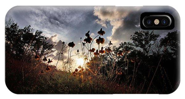Sunset On Daisy IPhone Case