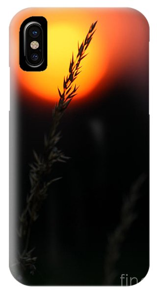IPhone Case featuring the photograph Sunset Seed Silhouette by Jeremy Hayden