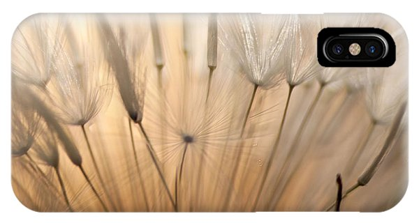 Sunset Seen Through A Dandelion IPhone Case