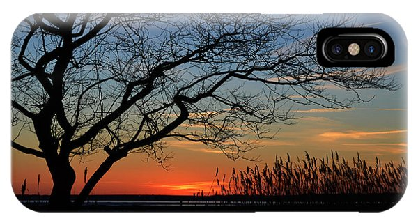 Sunset Tree In Ocean City Md IPhone Case