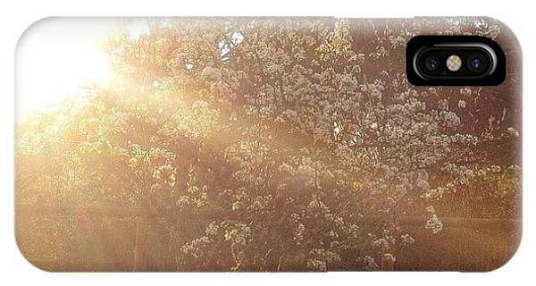 Tree iPhone Case - Sunshine On My Favorite Pear Tree All by Blenda Studio