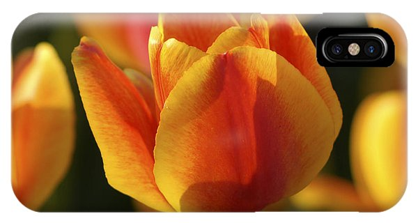 Sunshine Tulips IPhone Case