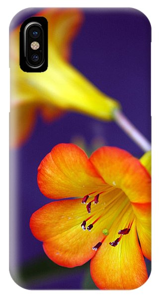 Sunshine IPhone Case
