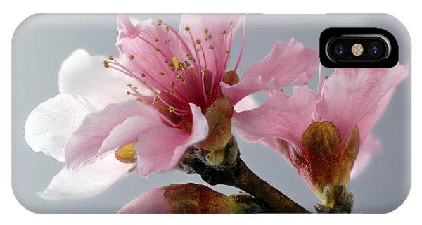 Kingsville iPhone Case - Surecrop Nectarine Blossoms by Lee Ann Stamm