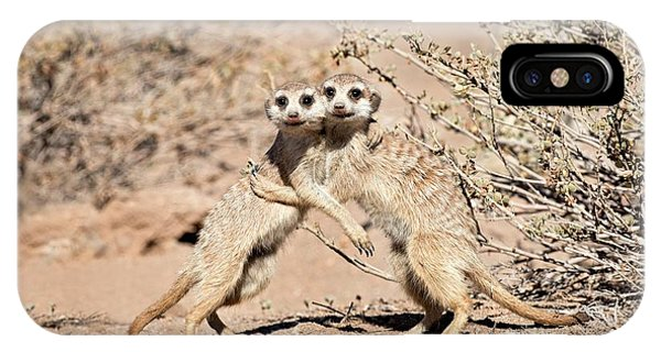 Meerkat iPhone Case - Suricates At Play by Tony Camacho