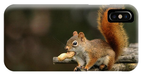 Surprised Red Squirrel With Nut Portrait IPhone Case
