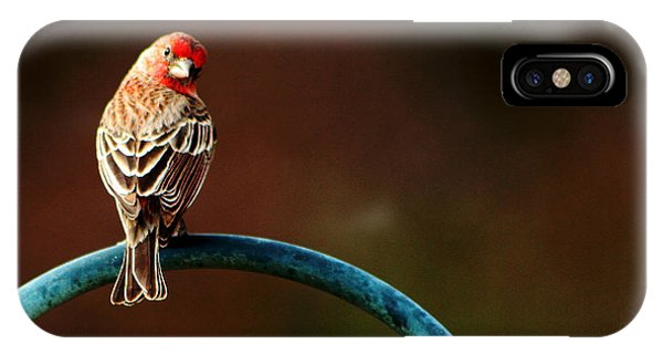 Surreal Purple Finch IPhone Case