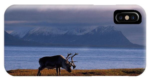 iPhone Case - Svalbard Reindeer Grazing Near The Sea by Norbert Rosing