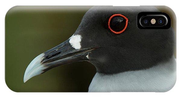 Swallow-tailed Gull (larus Furcatus IPhone Case