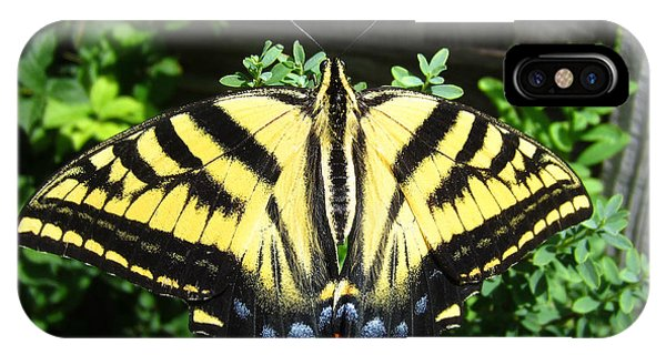 Swallowtail Butterfly Feeding IPhone Case