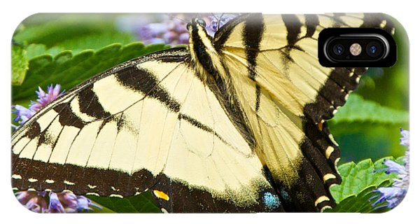 Swallowtail Butterfly On Anise Hyssop IPhone Case