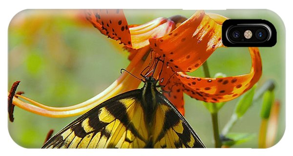 Swallowtail Butterfly3 IPhone Case