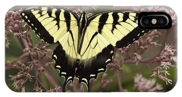 Swallowtail In Pink IPhone Case