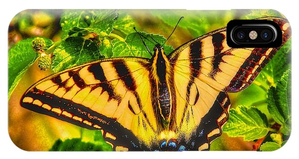 Swallowtail Phone Case by Larry Bodinson
