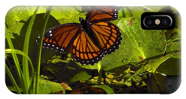 Swamp Butterfly IPhone Case