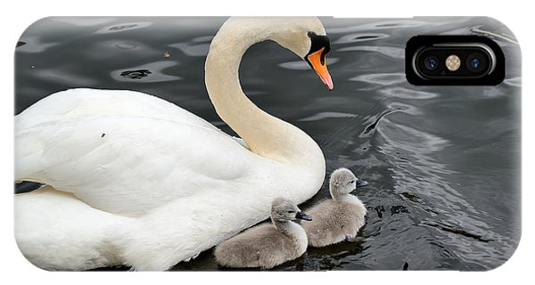Swan And Cygnets IPhone Case