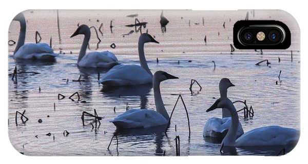 Swan At Dusk IPhone Case