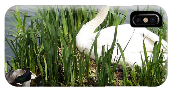 Swan Nesting IPhone Case