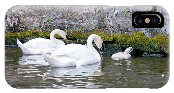Swans And Cygnets In Brugge Canal Belgium IPhone Case