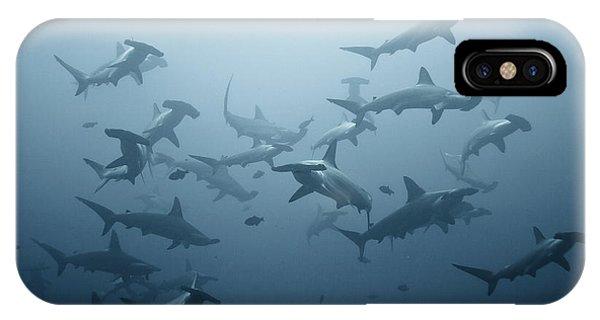 Hammerhead Shark iPhone Case - Swarming by Alexander Safonov