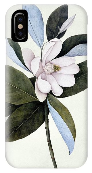 North London iPhone Case - Sweet Bay (magnolia Virginiana) by Natural History Museum, London/science Photo Library