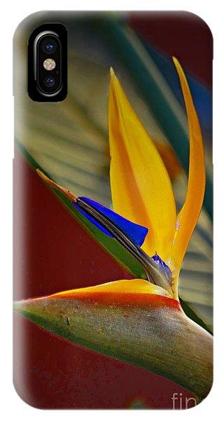Sweet Bird In Veracruz IPhone Case