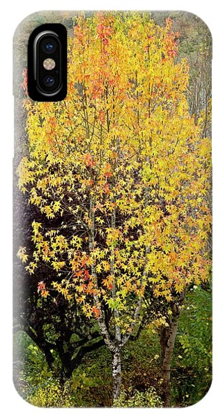 Sweet Gum (liquidambar Styraciflua) Phone Case by Bob Gibbons