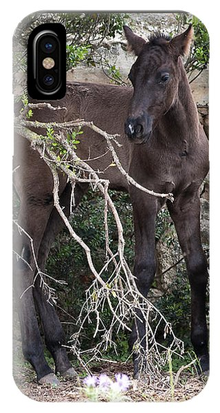 sweet heart - A tender foal wait his beloved mother  IPhone Case