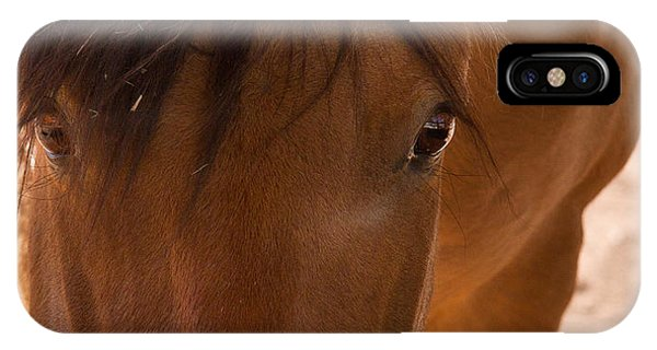 Sweet Horse Face IPhone Case