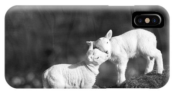 Wiese iPhone Case - Sweet Little Lambs by Angel Ciesniarska