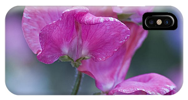 Sweet Pea In Pink IPhone Case