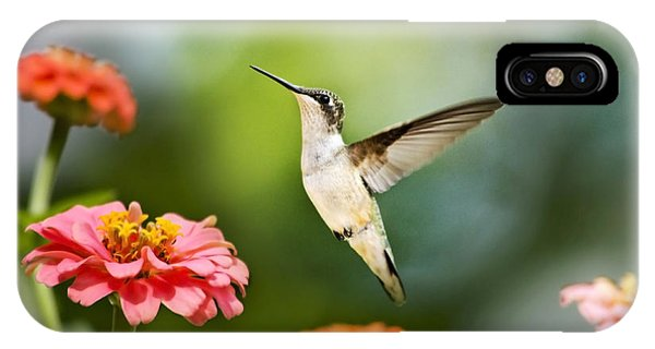 Humming Bird iPhone Case - Sweet Promise Hummingbird by Christina Rollo