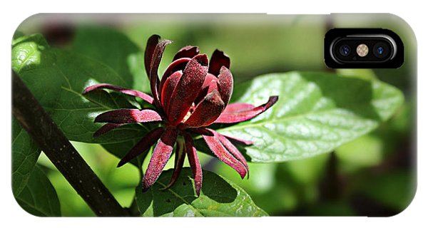 Sweet Shrub IPhone Case