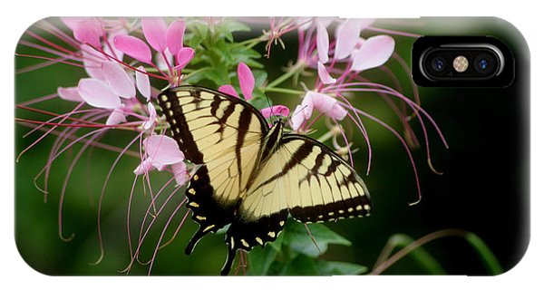 Sweet Swallowtail IPhone Case