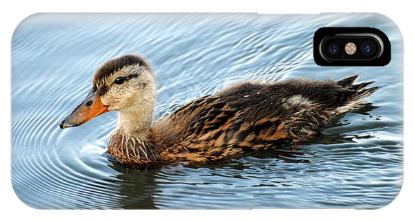 Swimming Mallard Hen IPhone Case