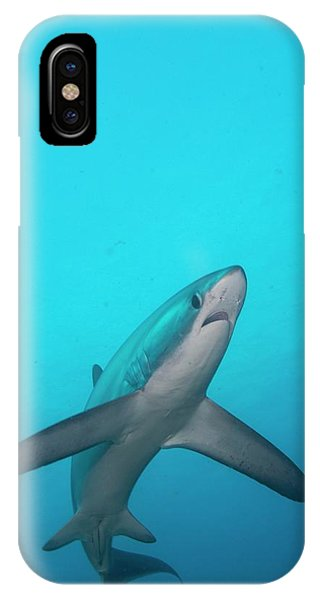 Swimming Thresher Shark IPhone Case