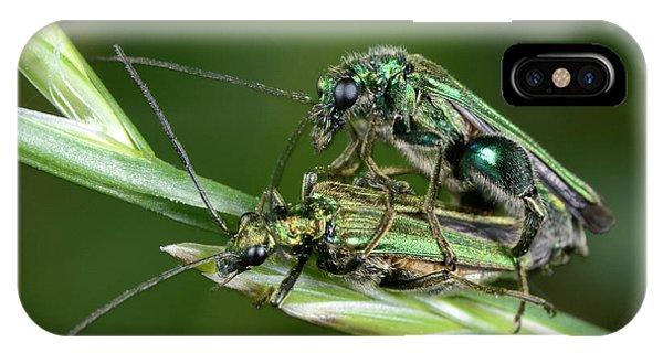 Behaviour iPhone Case - Swollen-thighed Beetles by Nigel Downer