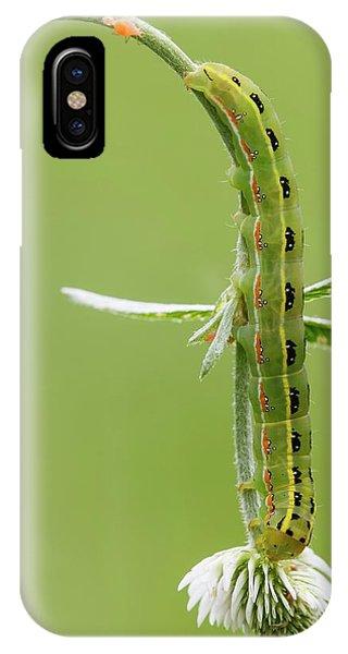 Sword-grass Caterpillar Phone Case by Heath Mcdonald
