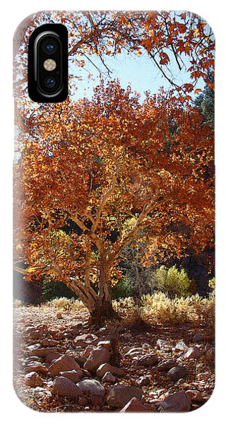 Sycamore Trees Fall Colors IPhone Case