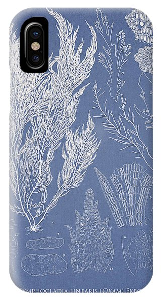 Symphocladia Linearis IPhone Case