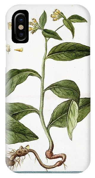 Symphytum Majus Phone Case by Rare Book Division/new York Public Library