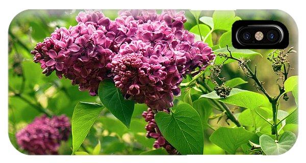 Cultivar iPhone Case - Syringa Vulgaris 'hugo De Vries' Flowers by Adrian Thomas
