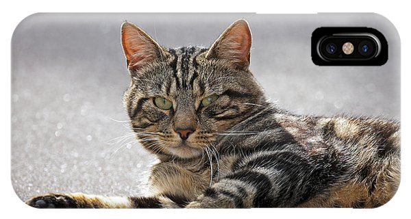 Tabby Cat IPhone Case