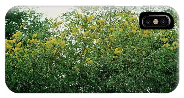 Yellow Trumpet iPhone Case - Tabebuia Serratifolia by A S Gould/science Photo Library